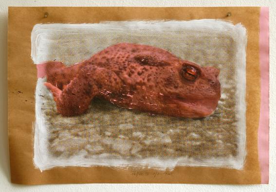 Pat Noser Froschdruck 2012 30 x 42 cm Print auf Gouache auf Packpapier